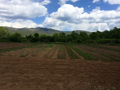 Fields of crops at Red Willow Farm. Photo by Elizabeth Hoover