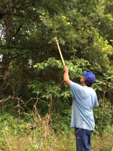 Muscogee elder Frank Harjo, pointing at an oak tree. Photo by Elizabeth Hoover