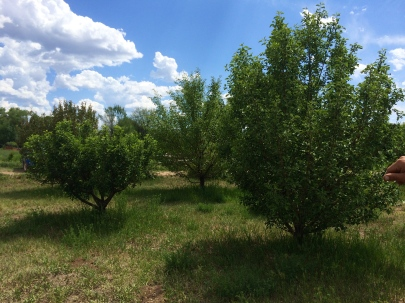 Red Willow orchard, photo by Elizabeth Hoover