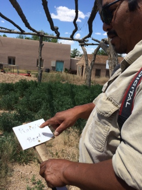 George Toya holding a sign with the Tewa word for beets. Photo by Elizabeth Hoover