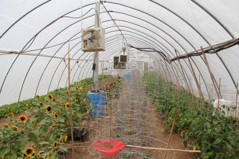 Greenhouse that uses the phase change system to heat the soil. Fans near the blue bins draw warm air into the soil