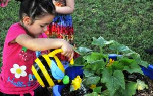 Serenity Terhune, of Locust Grove, Oklahoma, waters the vegetables at Cherokee Heights Head Start in Pryor. Photo courtesy of Nativenewsoneline