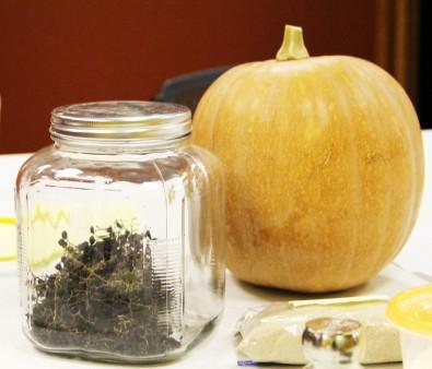Indian pumpkin and dried possum grapes