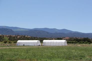 Hoop houses on the Tesuque farm. Photo by Elizabeth Hoover