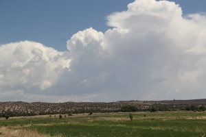 Alfalfa fields at Cochiti Pueblo. Photo by Angelo Baca