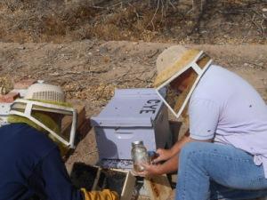 CYE bee project
