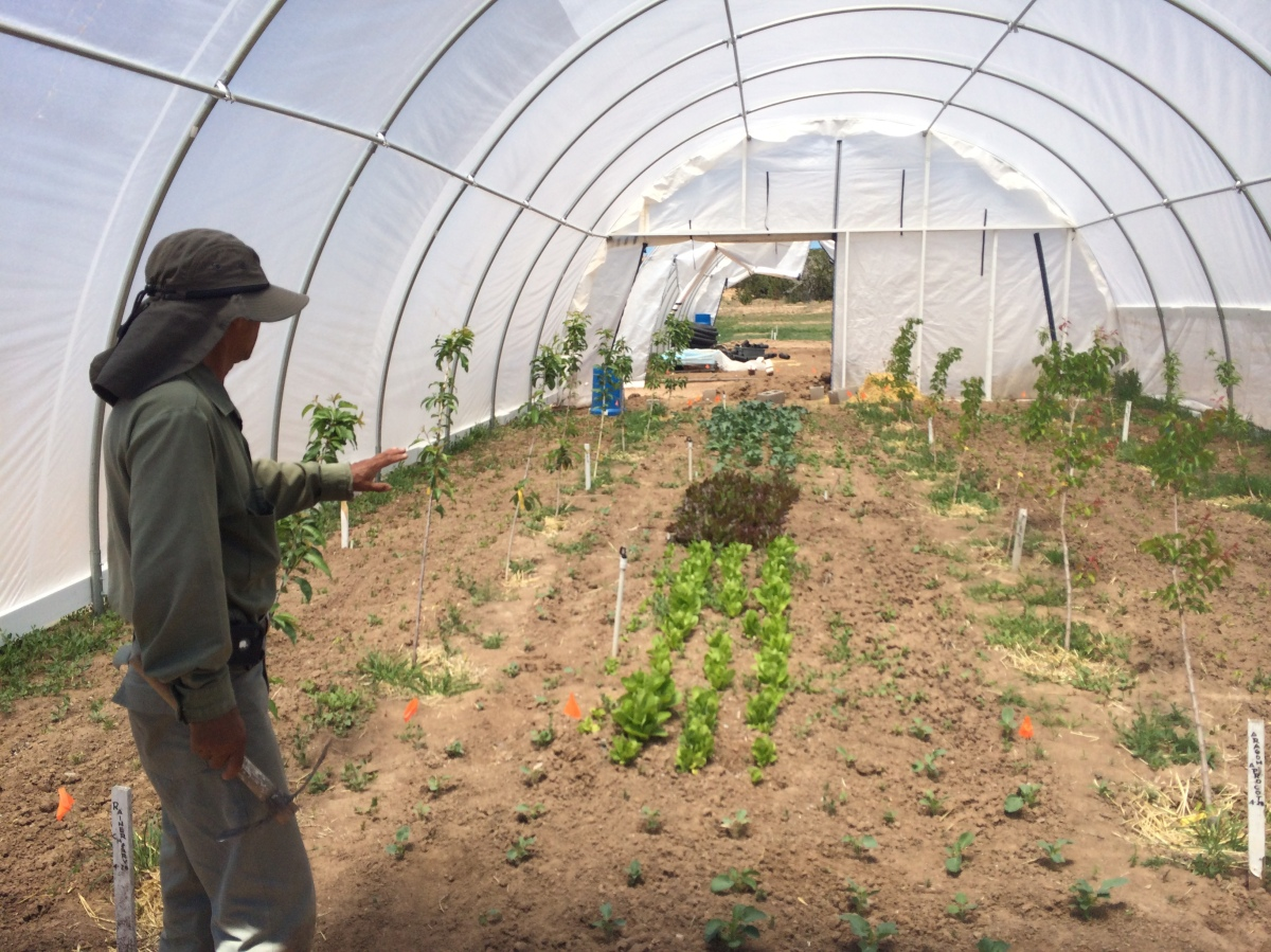 Tesuque Pueblo Farm Nm From Garden Warriors To Good
