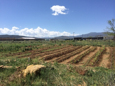 Garden outside of the Taos Food Center. Photo by Elizabeth Hoover