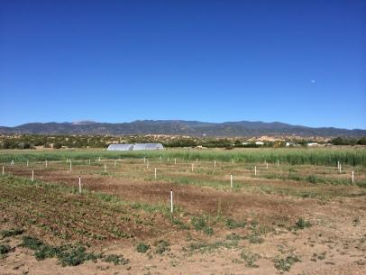 Tesuque Farm. Photo by Elizabeth Hoover