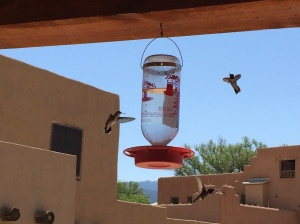 Hummingbirds on Clayton's back porch. Photo by Elizabeth Hoover