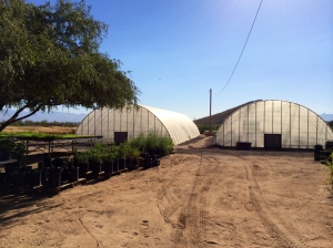 San Xavier Co-op Farm greenhouses. Photo by Elizabeth Hoover