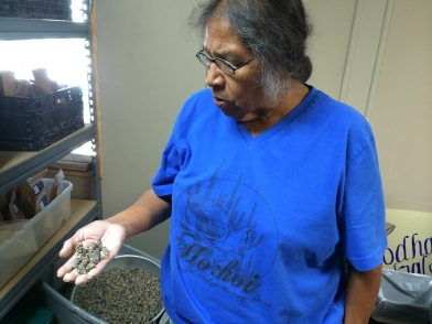 Traditional crop specialist Verna Miguel holding dried cholla buds. Photo by Elizabeth Hoover