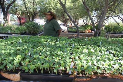 Tomasina Comacho and the San Xavier Co-op Farm nursery