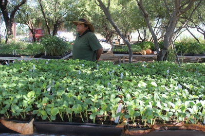 Tomasina Comacho and the San Xavier Co-op Farm nursery