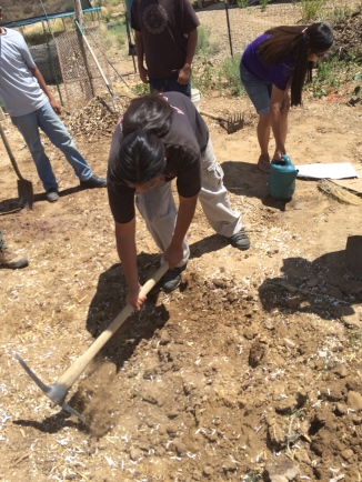 Step 7: dig the next hole, using this soil to cover the square that was just completed