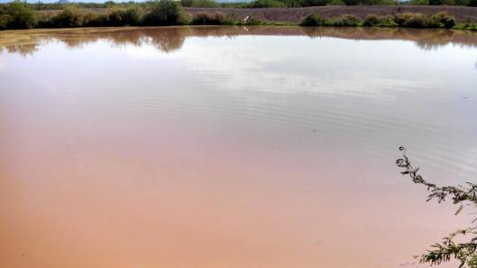The same pond a month later, after the monsoon rains. Photo by Anthony Francisco