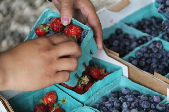 Fresh strawberries and blueberries from the Nisqually garden. Photo by Angelo Baca