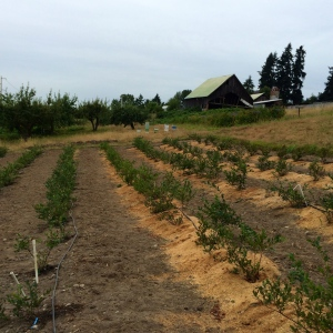Nisqually Tribe Community Garden, Dupont WA | From Garden ...