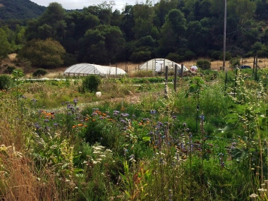 Indian Valley Organic Farm & Garden. Photo by Elizabeth Hoover