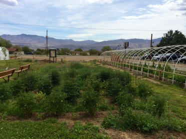 Big Pine Paiute Tribe Sustainable Food System Development Project demonstration garden. Photo by Elizabeth Hoover