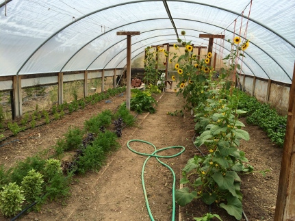 Greenhouse at Indian Valley Farm & Garden. Photo by Elizabeth Hoover