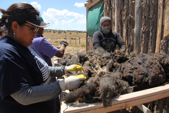 Sorting through wool to pull out any debris before it's washed. Photo by Angelo Baca