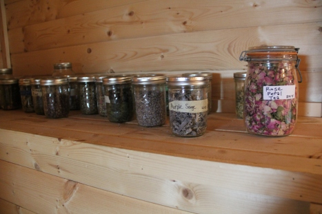 Herbs from the garden are dried and saved for tea. Photo by Angelo Baca