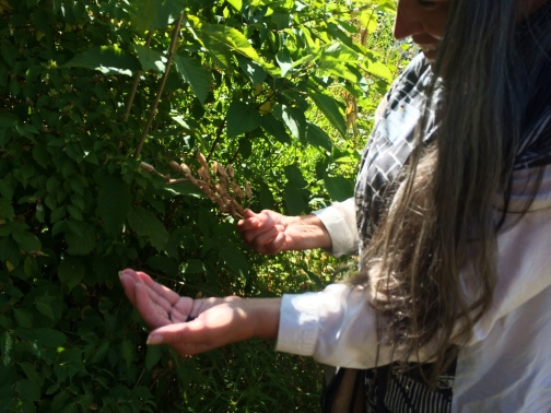 Judy holding a camas seed pod. Photo by Elizabeth Hoover