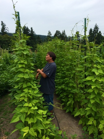 Julian picking green beans. Photo by Elizabeth Hoover