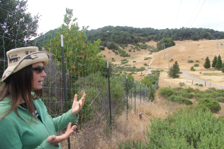 Melissa Nelson, looking out over the 1.5 acre field that will soon become the ethnobotanical teaching garden. Photo by Angelo Baca