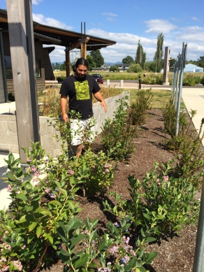 MFSP also coordinated an edible landscape in the front of the elders complex, including blueberry bushes. Photo by Elizabeth Hoover