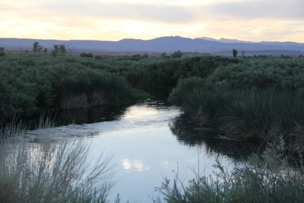 Owens River. Photo by Elizabeth Hoover