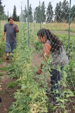 Grace and Julian picking sugar snap peas. Photo by Angelo Baca