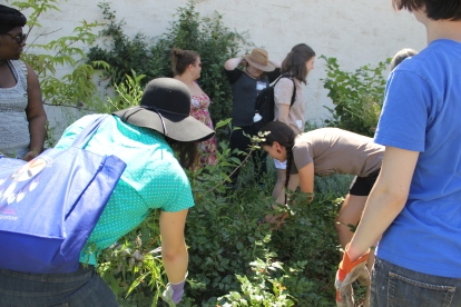 "Students from Judy's ""Indigenous Gardens and Food Justice"" class pulling weeds in the medicine wheel garden. Photo by Angelo Baca"