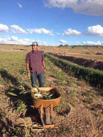Ty Tsosie picking corn. Photo by Roberto Begay