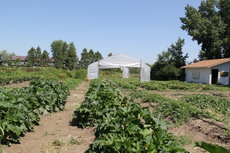 Cheyenne RIver Youth Project's Winyan Toka Win Garden. Photo by Angelo Baca