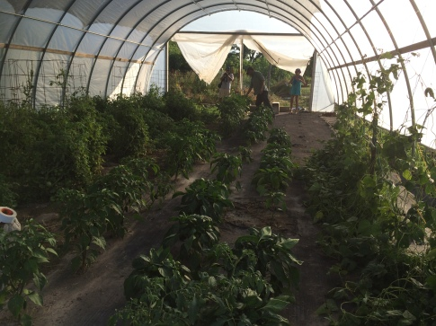 Inside the SBAP hoop house. Photo by Elizabeth Hoover
