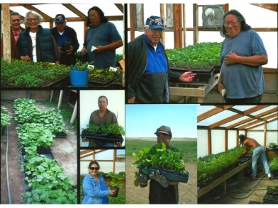 Photos of the SBAP greenhouse. Photo courtesy of Slim Buttes Agricultural Project