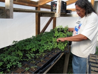 Milo tending to seedlings in the SBAP greenhouse. Photo courtesy of Indian Country Today