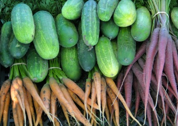 Fresh picked vegetables from the Winyan Toka Win Garden garden. Photo by Angelo Baca