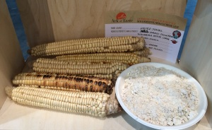 Tuscarora white corn, part of the Ark of Taste. Photo by Elizabeth Hoover