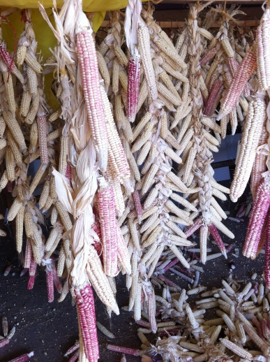 Pink Lady corn and white corn, harvested in 2012. WELRP has been growing this corn out for the past several years, with the assistance of a SARE grant http://mysare.sare.org/mySARE/ProjectReport.aspx?do=viewRept&pn=LNC08-301&y=2010&t=0 Indigenous Corn Restoration SARE grant. Photo by Elizabeth Hoover, March 2013