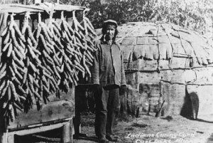 Late 19th century Anishnaabe man curing corn on Cass Lake. Photo courtesy of First People