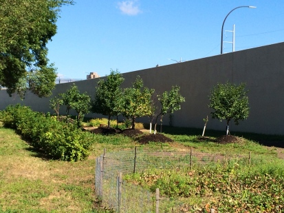 Apple, pear and cherry trees, raspberry bushes, and the strawberry patch. Photo by Elizabeth Hoover