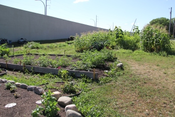 Corn patch, turtle garden, and herb box. Photo by Angelo Baca