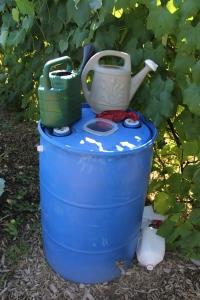 watering cans on a rain barrel. Photo by Angelo Baca