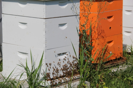 DOWH bee hives, built in 2010 by Meagan O'Brien. Photo by Angelo Baca