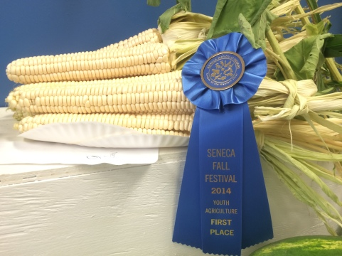 Prize winning corn from the ECLC garden. Photo courtesy of Jason Corwin