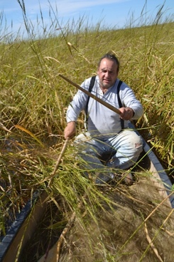 Bruce Savage (Anishnaabe from Fon du Lac) knocking rice into a canoe. Photo courtesy of Dan Cornelius