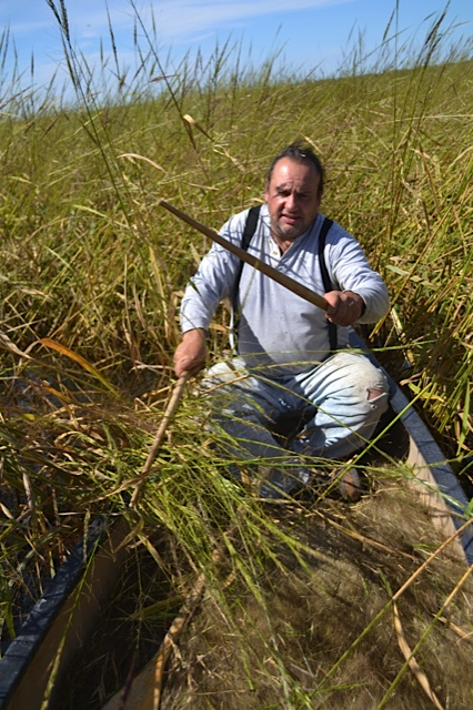 Wild Rice: Spirit Lake Native Farms, Fon du Lac Reservation,MN